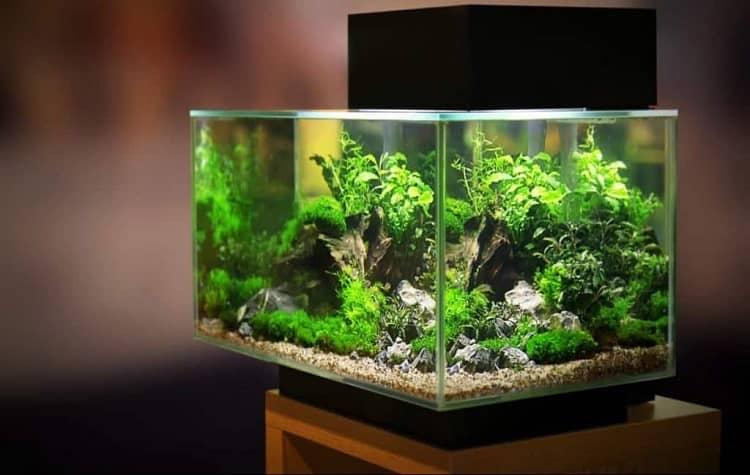 meilleur aquarium 30 litres
